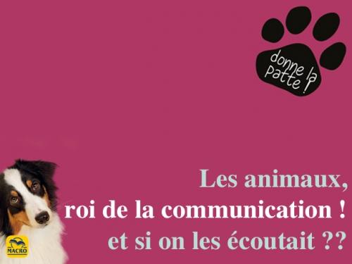 Les animaux :  rois de la jungle ou de la communication ?