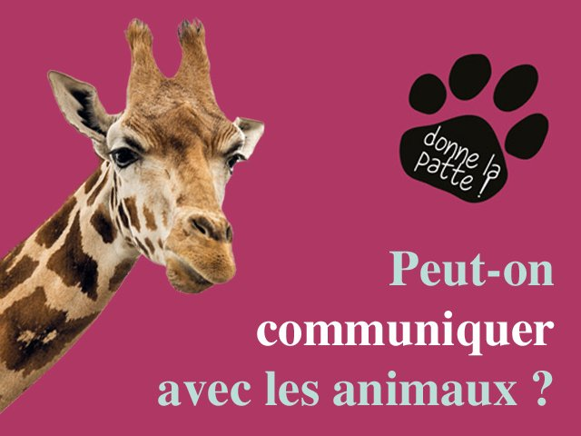 Peut-on communiquer avec nos animaux ?