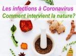 Traiter les infections à Coronavirus par les plantes (S. H. Buhner) 1\2