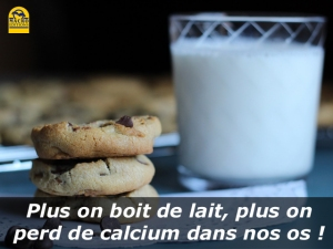 Plus on boit de lait,  plus on perd de calcium dans nos os