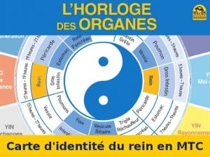 Le professeur Li Wu dresse une carte d'identité pour chacun de nos organes (MTC)