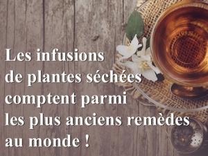 Les infusions de plantes séchées comptent parmi les plus anciens remèdes au monde !