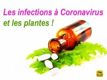 Traiter les infections à Coronavirus par les plantes (S. H. Buhner) 2\2