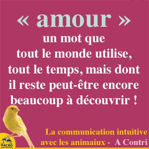 amour dans la communication avec les animaux