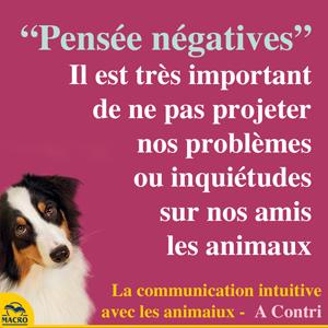éviter d'être trop négatif avec les animaux, ils le sentent