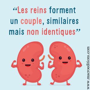 les reins sont un couples similaires mais pas identiques