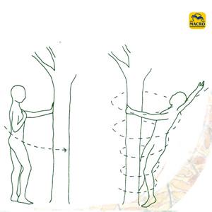 exercice du vortex entre l'homme et l'arbre