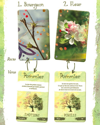 carte 1 et 2 - esprit des arbres