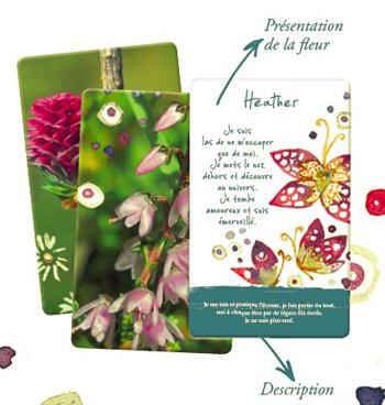 les cartes des fleurs de bach - presentation