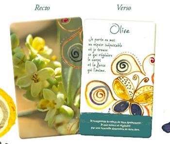 les cartes des fleurs de Bach - recto & verso