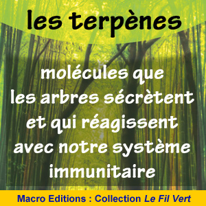 les terpènes molécules des arbres - santé - promenade