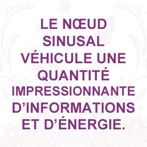 Le nœud sinusal véhicule une quantité impressionnante d'informations et d'énergie
