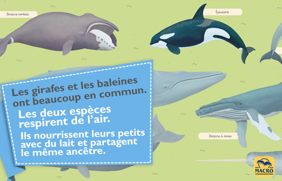 la baleine et la girafe