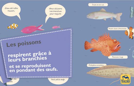 la respiration des poissons