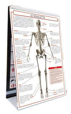 présentoir planche anatomique humaine