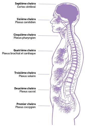Chakras et ganglions nerveux - Judith Anodea